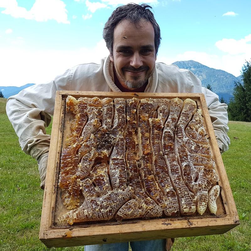 bienen halten ohne honig ernten